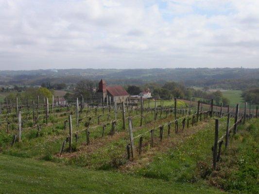 champs de vigne Jurançonnais