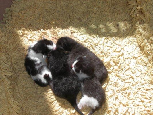 4 bébés